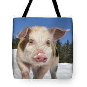 Piglet Walking In The Snow Tote Bag