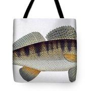 Pike Perch Tote Bag
