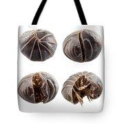 Pill-bug Armadillidium Vulgare Tote Bag
