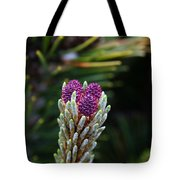 Pine Cone Buds Tote Bag