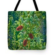 Pine Cones On Spruce Tree In Rancheria Falls Recreation Site-yt Tote Bag