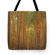 Pine Forest Lienewitz Germany Tote Bag