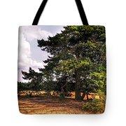 Pine Tree In Hoge Veluwe National Park 1. Netherlands Tote Bag