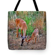 Piney Mountain Doe And Fawn Tote Bag