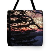 Piney Sunset Tote Bag