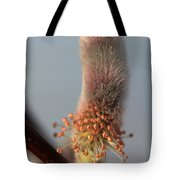 Pink And Grey Pussy Willow In Bloom Tote Bag
