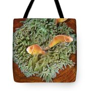 Pink Anemonefish Trio Papua New Guinea Tote Bag