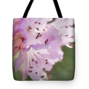 Pink Azalea Flowers In The Morning Light Tote Bag