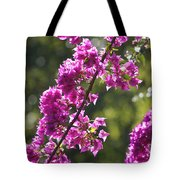 Pink Bougainvillea Sunshine Tote Bag