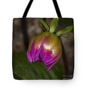 Pink Dahlia Bud Tote Bag