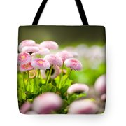 Bellis Perennis Pomponette Called Daisy Blooming  Tote Bag