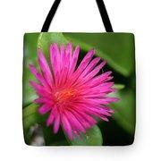 Pink Flower Of Succulent Carpet Weed  Tote Bag