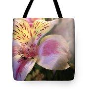 Pink Glow Lily  Tote Bag