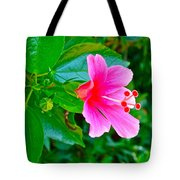 Pink Hibiscus Near Celadon Factory In Chiang Mai-thailand Tote Bag