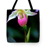 Pink Lady's Slipper Tote Bag