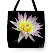 Pink N Yellow Water Lily Too Tote Bag