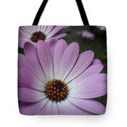 Pink Osteospermum Tote Bag