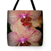 Pink Striped Orchids Tote Bag