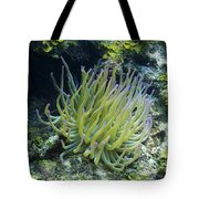 Pink Tipped Giant Sea Anemone Tote Bag