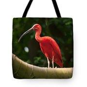 Pink Tropical Bird Tote Bag