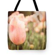 Pink Tulip Field Tote Bag