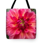 Pink Zinnia Flower Upclose Tote Bag