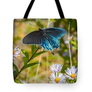 Pipevine Swallowtail On Asters Tote Bag