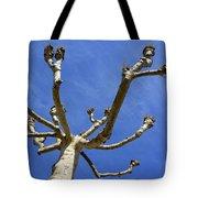 Plane Tree Tote Bag