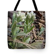 Plantain-leaved Pussytoes Wildflowers - Antennaria Plantaginifolia Tote Bag