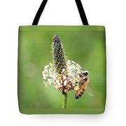 Plantain Pollen Tote Bag