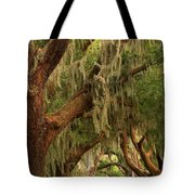 Plantation Oak Trees Tote Bag
