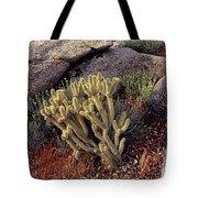 Plants On A Landscape, Anza Borrego Tote Bag