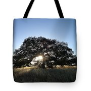 Plateau Oak Tree Tote Bag