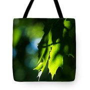 Play Of Light On Maple Leaves Tote Bag