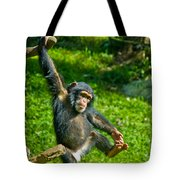 Playful Chimp Tote Bag