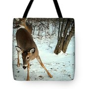 Playful In The Snow Tote Bag
