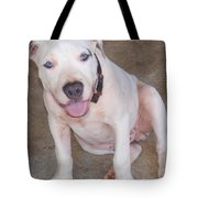Playful Pitbull Puppy Haaweo Tote Bag