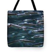 Plenty Of Fish In The Sea Tote Bag