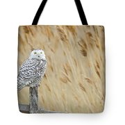 Plum Island Snowy Owl On A Fence Post Tote Bag