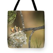 Plumbeous Vireo Begging Arizona Tote Bag by Tom Vezo