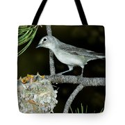 Plumbeous Vireo With Four Chicks In Nest Tote Bag