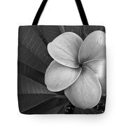 Plumeria With Raindrops Tote Bag by Shane Kelly
