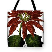 Poinsettia A Traditional Christmas Plant Vintage Poster Tote Bag