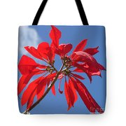 poinsettia from Madagascar Tote Bag