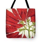 Poinsettia Pulcherrima Tote Bag by WG Smith