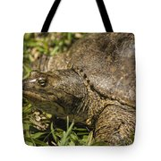 Pointed Nose Florida Softshell Turtle - Apalone Ferox Tote Bag