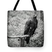 Pointing The Next Prey Tote Bag