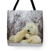 Polar Bear And 3 Month Old Cubs Tote Bag