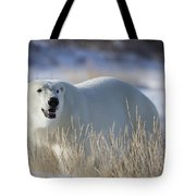 Polar Bear In The Sunshinechurchill Tote Bag