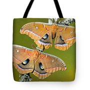 Polyphemus Moths Tote Bag